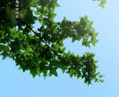 VC诱导保鲜 卡萨帝法式六门冰箱简评