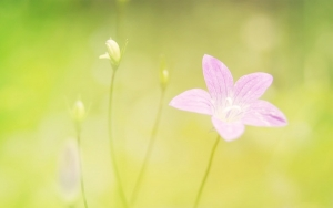 夏日粉色诱惑 九阳高出汁率榨汁机
