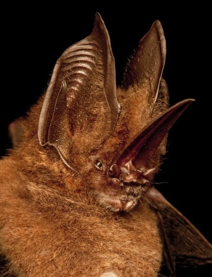 动物 中国 中南美洲/自然界拥有奇特鼻子的五种动物