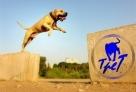 狗狗跑酷。这只黄毛狗狗,一看就是身手敏捷型的,可不,它这纵身一跃的姿态多有型,你猜,猜它能不能跳到对面?看这气势,狗狗能跳过对面,跑酷过关取得胜利。