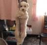 狗狗跳钢管舞。或许你以为这只小狗抱着这条钢管是主人所为,要是说这只小狗是自己跳上去并紧紧抱着钢管的,你会相信吗?我会相信喔,因为小狗非常的有灵性,具有一定的模仿的模仿能力。
