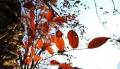 11.11寒意渐浓 惠而浦让衣物充满阳光的味道