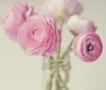 戴森高端新品国美首发 开启粉色美好家生活