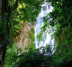 空气等级媲美森林瀑布 志高打造负离子氧吧空调
