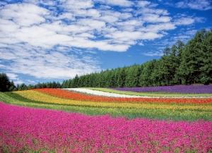 万紫千红总是春 大自然的那抹亮色图赏
