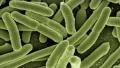 上亿细菌在冰箱扎堆 夏季来临该如何清洁?