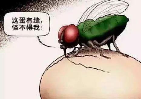 """""""剧情式""""拆机惹怒小米高管 但苍蝇不叮无缝蛋"""