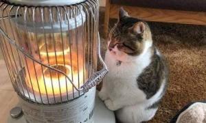 冬季一波大降温临近 志高空调助力防寒防冻