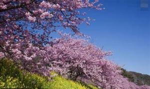 海信空調重磅推出春風新品 開創行業新賽道